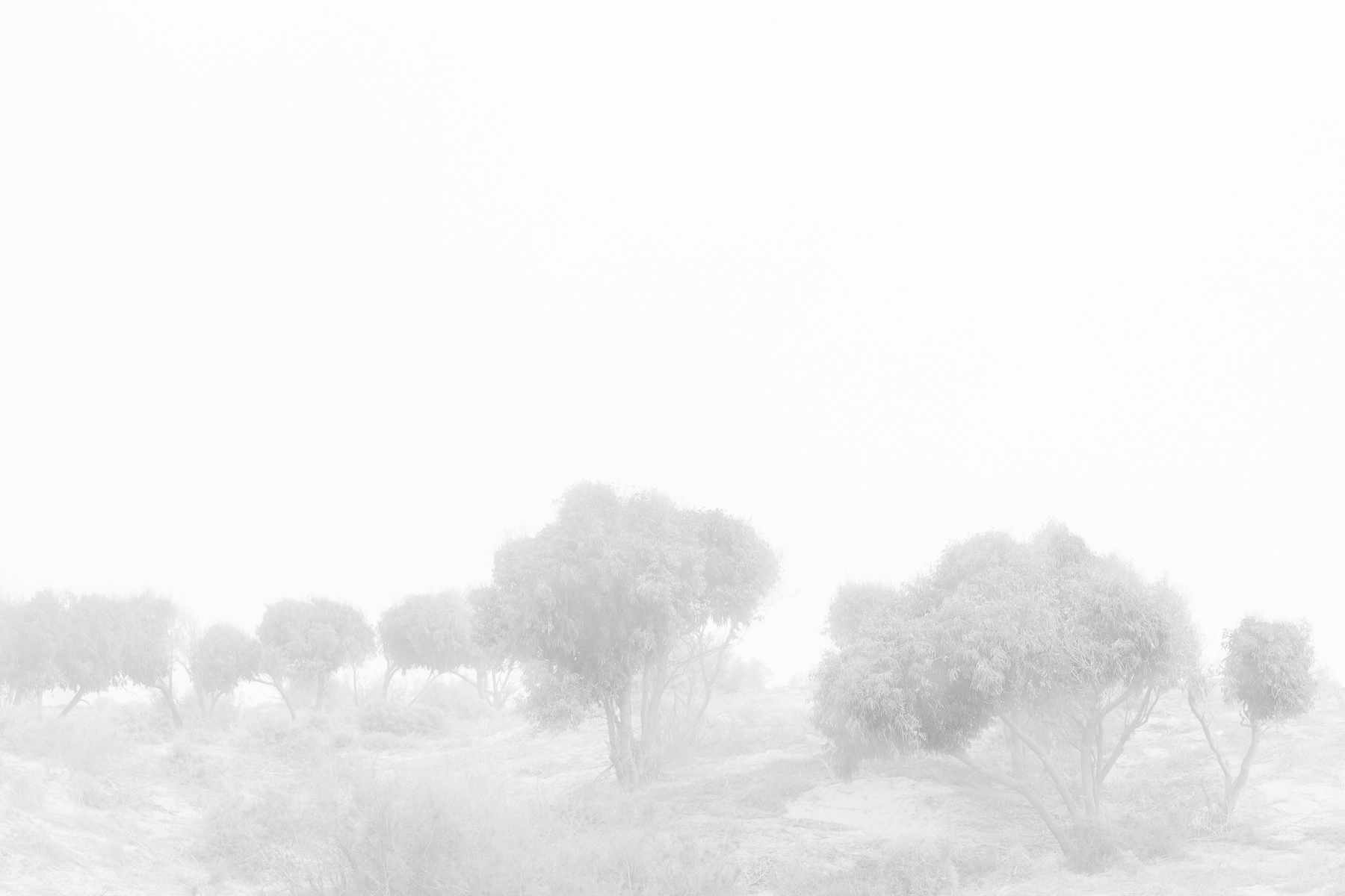white-shadow stephane louesdon @2018