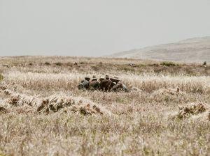 maroc-montagne-juin-2013-7.jpg